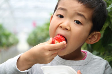 CEH Exposes Cancer-Causing Chemical Lurking in Children's Foods