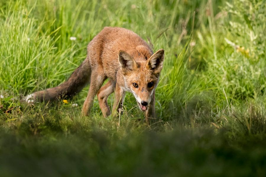 Dow: The Fox Guarding the Henhouse